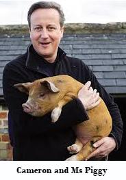 Cameron Pig