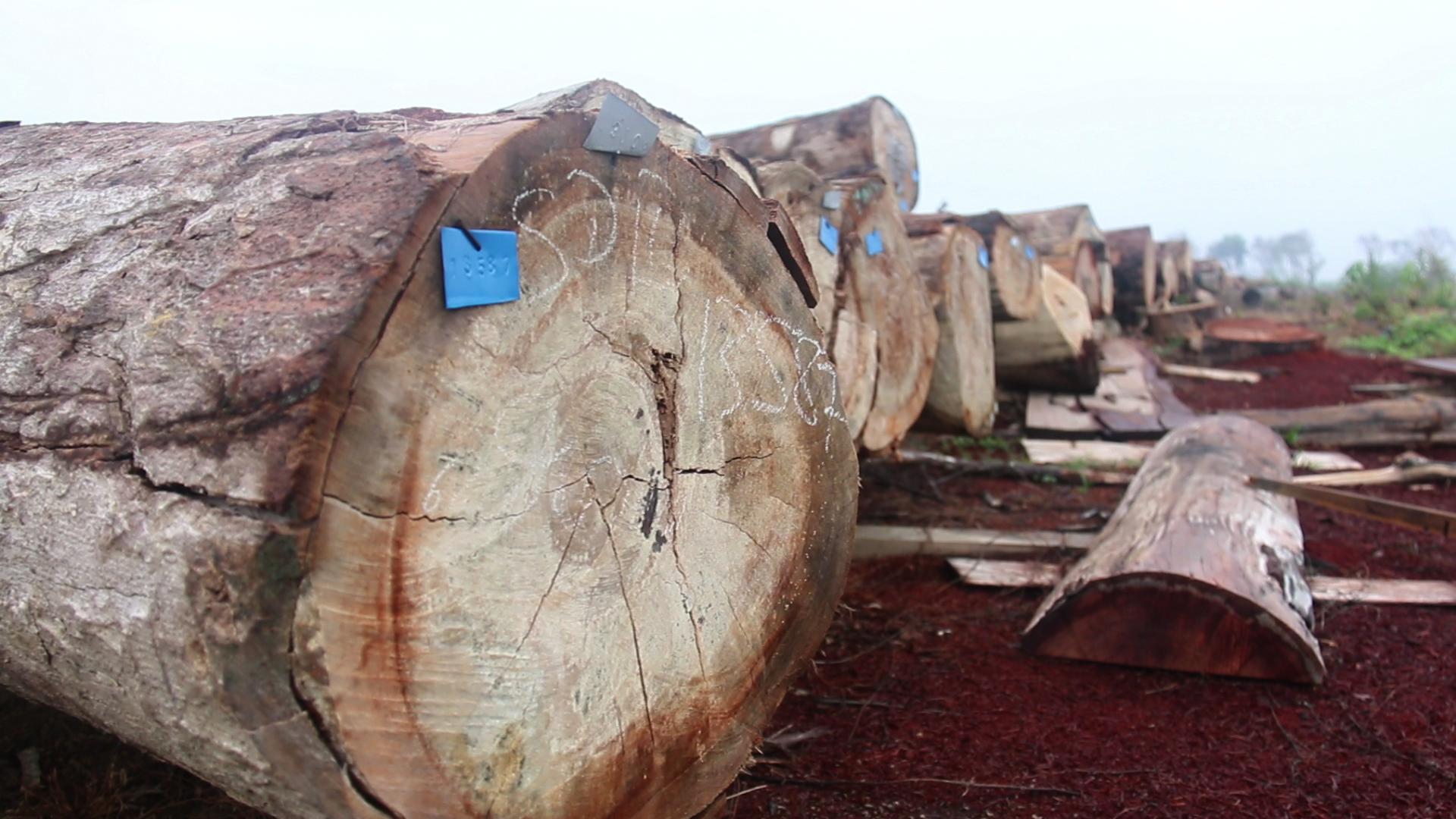 Sawmill Large log (4)