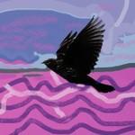 blackbird blacker & colouredFINAL