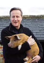 cameron pig 3
