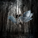 copulation of angels