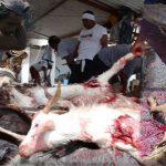 goat-slaughter