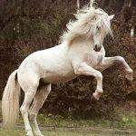 greyhorse6