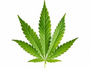 marijuana_1