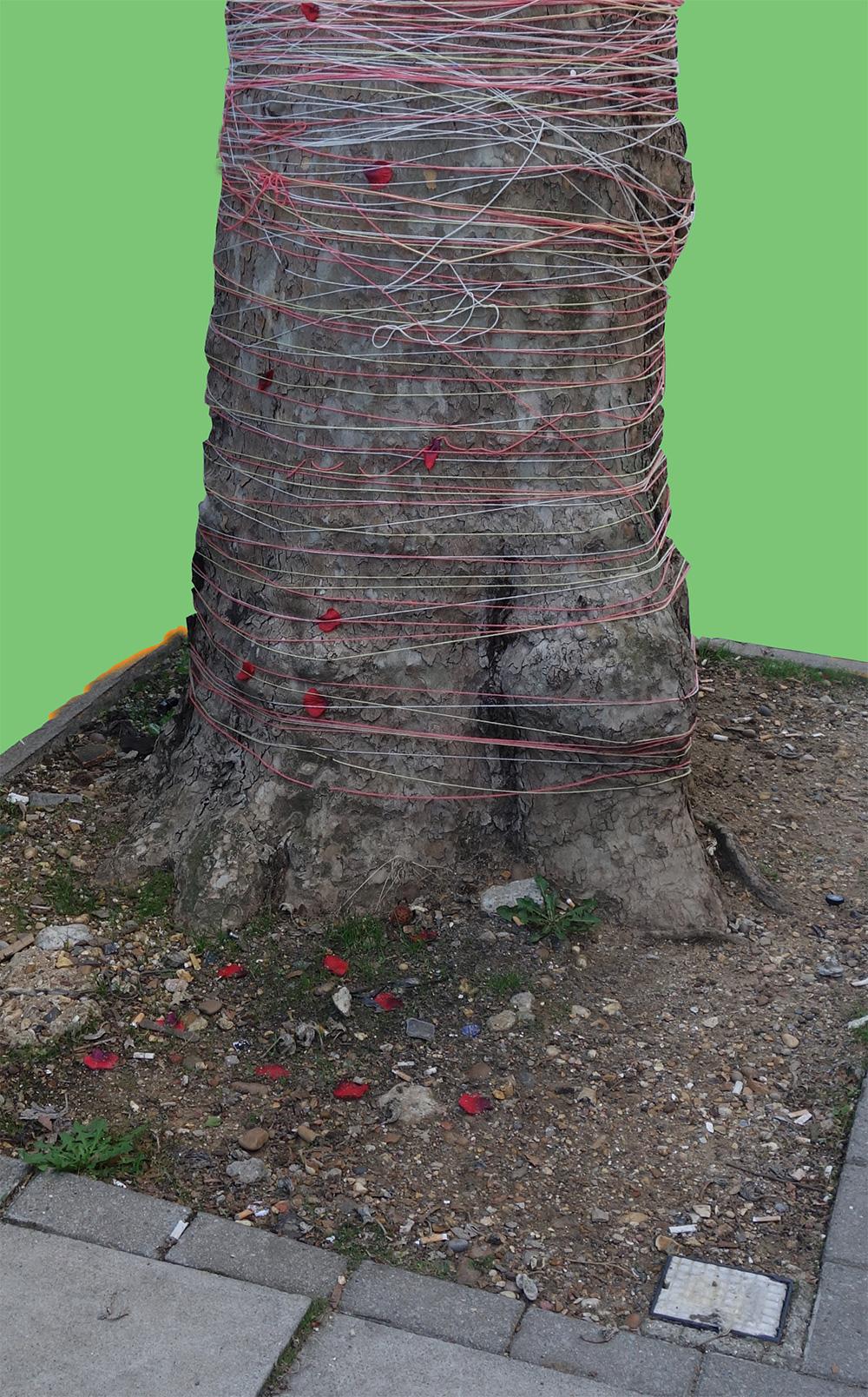 poppy-tree