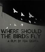 whereshouldbirdsflyx