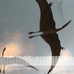 wingsx